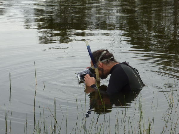 John Gooderham filming waterbugs in situ